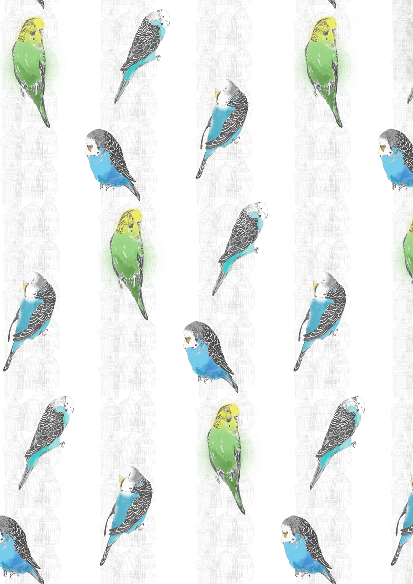 Budgies - Wallpaper design